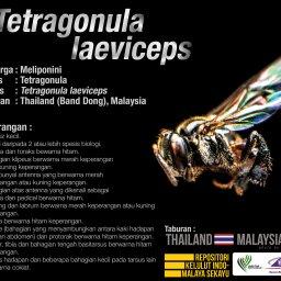Tetragonula_Laeviceps_Kelulut